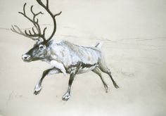 reindeer | Two Reindeer - Pencil and Gouache Study 11x16ins. (A3) Sold