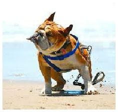 12 Happy Dogs and a Cat Have Fun at the Beach - Pet doof Cute Puppies, Dogs And Puppies, Cute Dogs, Doggies, Wrinkly Dog, Best Travel Deals, Animal Antics, Beach Fun, Beach Walk
