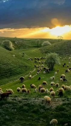 This picture depicts Santiago, the main character, at the beginning of the book. He is simply traveling through all of Andulasia (which is in Spain) without a certain goal or destination. To him, all that matters is his sheep and the journey. Beautiful World, Beautiful Places, Beautiful Sunset, Landscape Photography, Nature Photography, Belleza Natural, Farm Life, Amazing Nature, Belle Photo