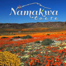 namaqualand flowers 2020 - Google Search Wild West, West Coast, Places To Go, Things To Do, Mountains, Google Search, Nature, Flowers, Travel