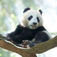 Mr. Wu in his hammock | Flickr - Photo Sharing!