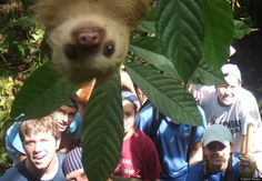 These Advocates Are Raising Awareness For Ridiculously Adorable Sloths