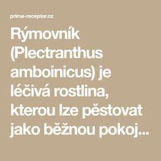 Rýmovník (Plectranthus amboinicus) je léčivá rostlina, kterou lze pěstovat jako běžnou pokojovkua a vlétě jako balkonovku. Její vzhled je poněkud nekompaktní a musí se často zastřihovat. Ovšem to je super, … Pesto, Math Equations
