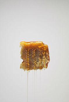 Honey // photo by Jonathan Gregson