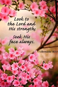 flower blossom wallpaper scripture - photo #2