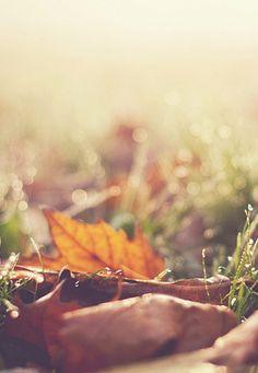 autumn leaves >