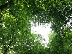 Wer lange genug auf dem Waldboden liegend den Blick zum Himmel richtet, verliert nach einiger Zeit die perspektivische Sicht und taucht in ein magisches Gefühl ein. Wogende Baumstämme und rauschende Blätter führen eine nicht enden wollende Inszenierung unglaublicher Schönheit auf.