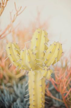 Pastel | Pastello | 淡色の | пастельный | Color | Texture | Pattern | Composition | cacti