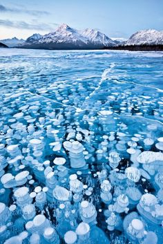 Frozen bubbles in a lake at the base of the Canadian Rockies