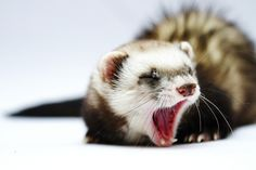 Are they sleepy or bored, aggressive or stimulated? Here's a look at 15 yawning animals and why they do it.