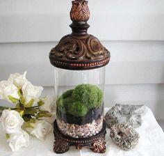 Terrarium container idea