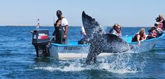 Whale Watching in #Baja  Photo by Jim White.