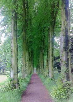 Lady Lucy's Walk at Wentworth Castle, South Yorkshire.