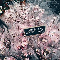 【emma_skarregaard_design】さんのInstagramをピンしています。 《How to cure the mood on a rainy day⛅ #flowers #cherryblossoms #copenhagen #interiordesigner #interior #decor #mind #mindfulness #happy #pink #color #romance #beautiful #mood #kultorvet #nørreport #home #sundaytreat》