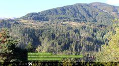 #Biodiversità crea biodiversità: gli #imboschimenti di pino nero realizzati negli anni '60 favoriscono oggi la #rinaturalizzazione spontanea dei #boschi   #sprecozero #paesaggio #bellezza #creatività #nutrireilpianeta #energiaperlavita #ruraland #comunicareilrurale #ruralandwed #ruraland4 #tradizioni #acqua #clima #energia #risorsenaturali #ambiente   Ancora 59 giorni e anche tu potrai partecipare al ruraland-WED.