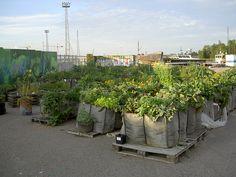 Guerilla-gardening. Kalasatama garden, Helsinki Finland | by Dodo.org, via Flickr