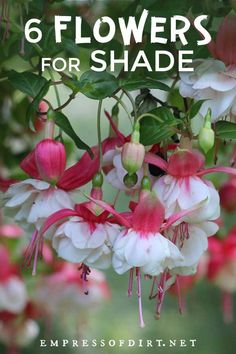 Choose these colorful flowering plants to brighten up a shade garden. Gardening Colorful Flowering Plants for Shade Gardens Flowering Shade Plants, Shade Garden Plants, Cottage Garden Plants, Garden Planters, Shaded Garden, Garden Sofa, Garden Furniture, Perrenial Flowers, Shade Flowers Perennial