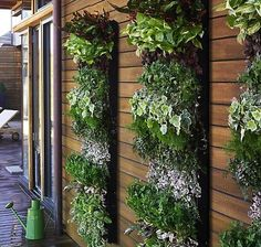 Great selection of planters attached to a wall.  Could be made with old mail boxes that used to attach to a house.  See more vertical gardening ideas - http://thegardeningcook.com/vertical-gardens/