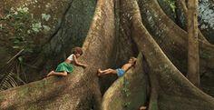 Arvores da Amazônia.