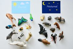 Montessori Nocturnal Diurnal Activity