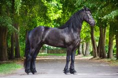 Breeds of carriage horse and pony