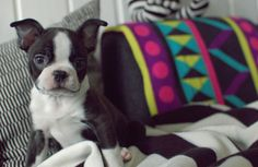 Soooo cute ❤