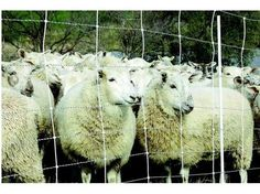 Gallagher fencing system now available in Portugal with Tosquia for animal protection
