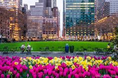 Bryant Park Tulips by Rommel Tan @rtanphoto by newyorkcityfeelings.com - The Best Photos and Videos of New York City including the Statue of Liberty Brooklyn Bridge Central Park Empire State Building Chrysler Building and other popular New York places and attractions.