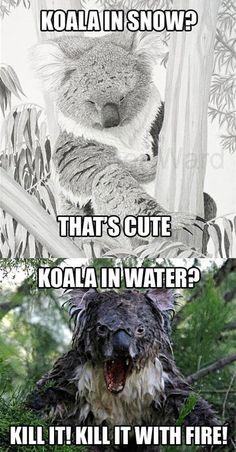 Koala in Snow & Water