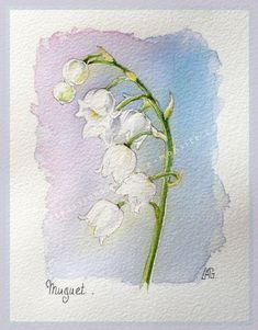 Muguet aquarelle - All About Watercolor Cards, Watercolor Illustration, Watercolour Painting, Watercolor Flowers, Painting & Drawing, Watercolors, Drawing Flowers, Watercolor Techniques, Botanical Art