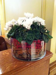 White cyclamen in glass vase with dried seasonal fruit, cinnamon sticks and pine…