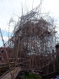Mike + Doug Starn: big bambu at the Venice Biennale, evolutionary and complex structure  http://www.starnstudio.com/