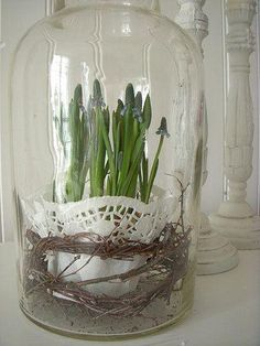 The doily is the perfect accent in this simple display. Glass Bell Jar, The Bell Jar, Glass Domes, Cloche Decor, Spring Bulbs, Bulb Flowers, Vintage Roses, Spring Flowers, Planting Flowers