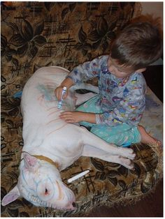 This is why dogs are mans best friend