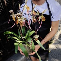 Fell head over heals in love with this Lady's Slipper orchid! Fleuriot fleurs, Geneva