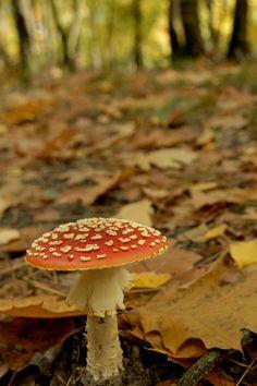Paddenstoel #herfst #paddenstoel #fall
