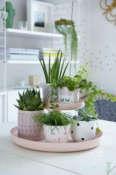 Tischdekoration-selber-machen-mit-Blumentöpfen Table Decoration themselves-are-with-flower pots Succulents Garden, Planting Flowers, Succulent Plants, Cactus Plants, Small Potted Plants, Indoor Succulents, Flower Plants, Flowers Garden, Decoration Plante