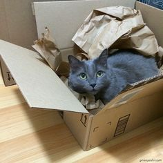 Oh Ginko... #readytoship #catinbox #lolcat #cat batteries not included XD