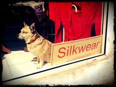 Silkdog