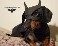 BATDOG Returns - the Dark Dog Rises.