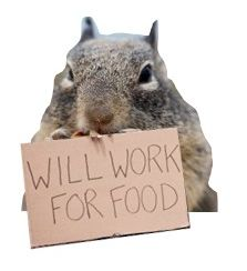 Squirrels are a great role model when it comes to storing food. Do you know why it's vitally important to have an emergency food storage? Here, we explain why, as well as supply you with plenty of ideas so you can get started on your very own.