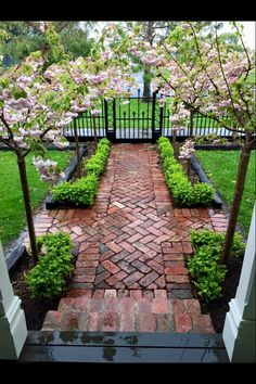 I really like the symmetry of this entry sidewalk, it is formal and yet inviting. The paired flowering trees create a nice, soft visual canopy to the walkway and the boxwood softens the line between the brick pavers and the narrow gardens. Beautiful fencing and gate.