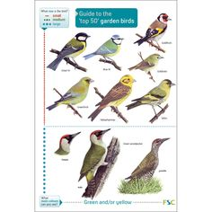 Guide to the top 50 garden birds fold-out chart