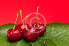 Fruits - Wet cherries on green leaves with red background.