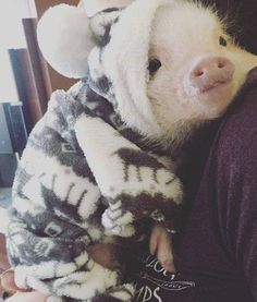58 Adorable Animals To Help Get You Through The Day – Pig page – – Andreas Koch - Baby Animals Cute Baby Pigs, Cute Piglets, Baby Piglets, Cute Little Animals, Cute Funny Animals, Little Pigs, Teacup Pigs, Mini Pigs, Pet Pigs