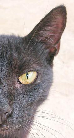 My cat - A close up photo of my cat