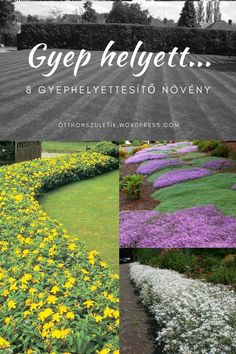Gyep helyett… Lake Forest, Stepping Stones, Outdoor Decor, Flowers, Plants, Gardening, Design, Yard Landscaping, Household