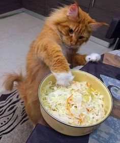 This is a great pic, a cat caught in the act!