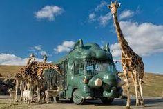 African Safari..