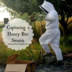 How to capture a honey bee swarm *I just helped a fellow beekeeper catch her swarm of honeybees a couple of weeks ago. Honey Bee Swarm, Honey Bee Hives, Honey Bees, Decrystallize Honey, Bee Equipment, Package Bees, Einstein, Buzz Bee, Raising Bees